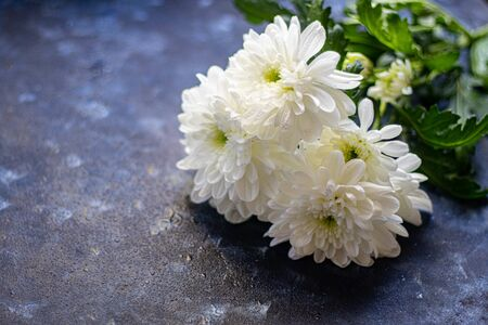 Bouquet of chrysanthemums. On the petals are drops of water that glow under the rays of light. Can be used for cards, covers.
