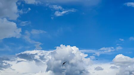 Blue sky with clouds, flying birds and green branches. Copy space.