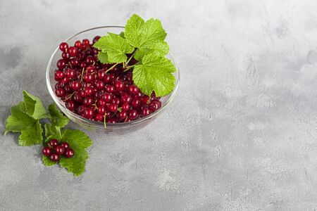 Red currants and green leaves on a dark background. Vitamin cocktail.