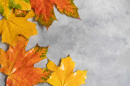 Wedge fallen leaves on a gray stone background. Backgrounds, textures. Autumn concept. Copy space.