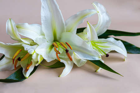 A bouquet of lilies on a light background. Mother's Day, Women's Day, Valentine's Day or Birthday. Copy space. Stok Fotoğraf - 163747022