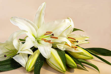 A bouquet of lilies on a light background. Mother's Day, Women's Day, Valentine's Day or Birthday. Copy space. Stok Fotoğraf - 163747026