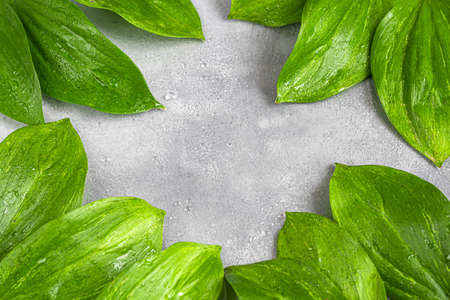 Green leaves with water drops on a dark background. Backgrounds and textures. Copy space. Stok Fotoğraf - 163915993