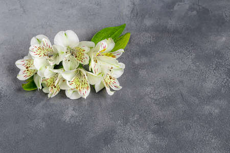 A bouquet of wild orchids on a light background decorated with ribbons. Mother's Day, Women's Day, Valentine's Day or Birthday. Baner. Copy space. Stok Fotoğraf - 164056439