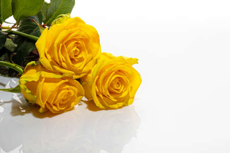 Bouquet of yellow roses on a white background. Mother's Day, Women's Day, Valentine's Day or Birthday. Isolate. Copy space.