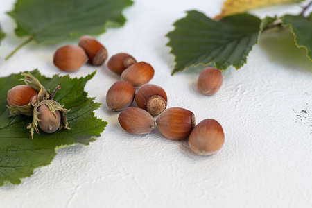 Hazelnuts on a light background with green leaves. Contains beneficial vitamins and minerals. Copy space. Zdjęcie Seryjne