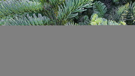 Plants on a stone background. Pine, thuja and spruce branches.