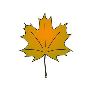 Maple leaf in autumn, fall season