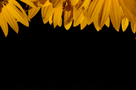 Yellow flower leaves at the top of the picture and black ornament