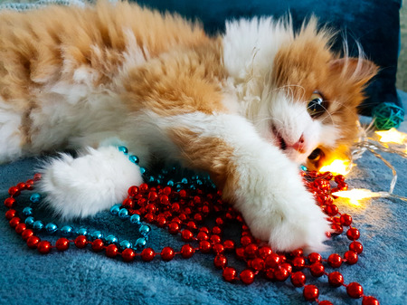 Red fluffy cat lies on cozy turquoise blankets next to Christmas multi-colored garlands and luminous stars