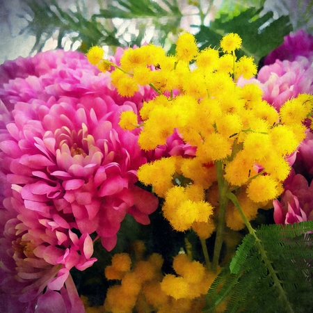 A bouquet of chrysanthemums and mimosa close up with green leaves stylized as a drawing