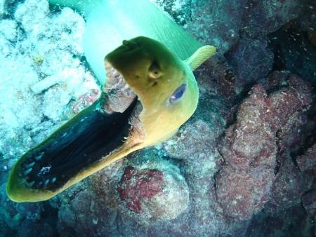 Green Eel Imagens