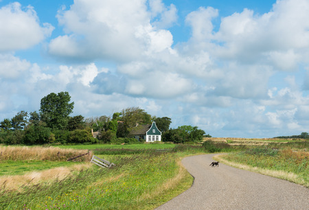 texel: Road on the island of Texel with meadows and a pittoresque house in the background and a cat on the road.