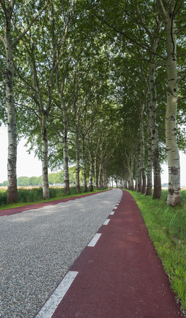 poplar  banks: Curved road with trees and with red cycling path in the province of Groningen. Stock Photo