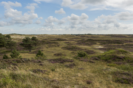 texel: Dunes, heather and grass in the National Park of the isle of Texel.