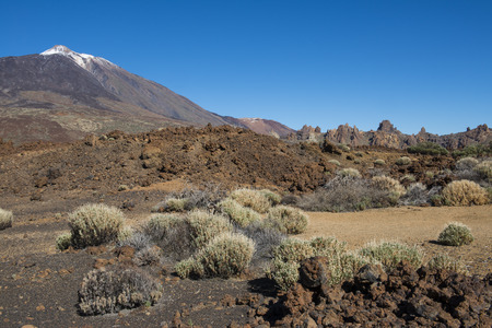 lava field: Lava Field with bushes El Teide on the island of Tenerife in Spain.