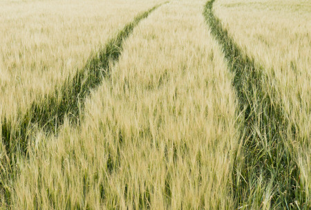 cropland: Track in a cropland. Stock Photo