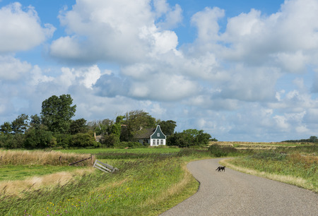 Road on the island of Texel with meadows and a pittoresque house in the background and a cat on the road. photo