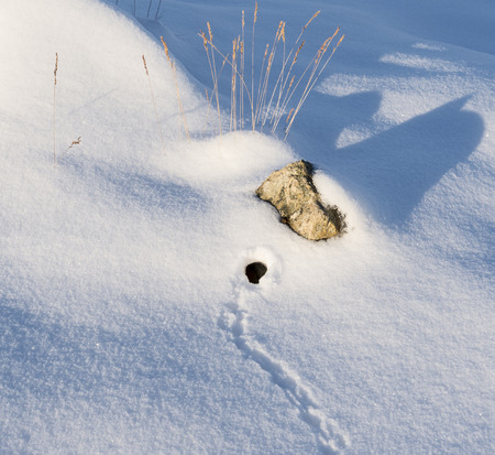 mouse hole: Mouse traces and a hole in the snow. Stock Photo