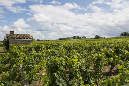 saint emilion: Vinyard at Saint Emilion in France with small house in a vineyard and white clouds.
