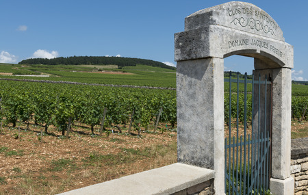 jacques: Vineyard of Domaine Jacques Prieur in France Baune