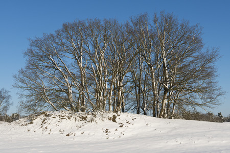wintersport: Small Snow Hills and Trees in National Park Loonse and Drunense Duinen in the Netherlands Stock Photo