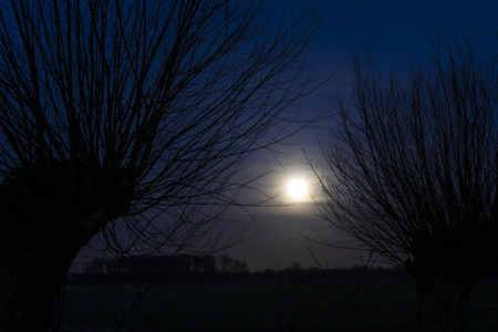 Moon between two plloard willows at night with dark blue sky and branches.