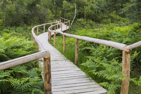 Hikingtrail in nationaal park de Meinweg in Limburg.