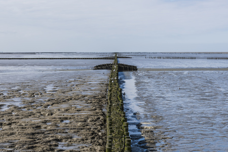 dikes: Coastline of the Waddensea at Friesland wit mud flats and protection poles and dikes.