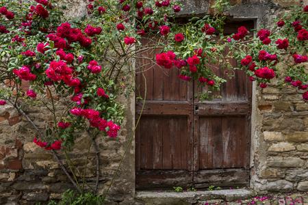 Red roses and old wooden door in Mombaldone in Piedmont, Italy.