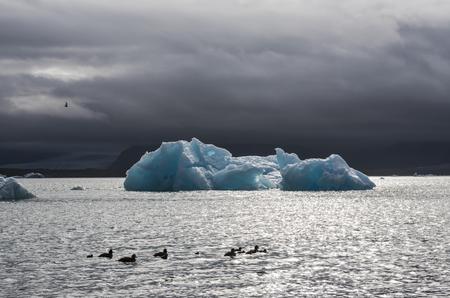climatology: Ice blocks and ducks at the lake of   Jokulsarlon glacier lagoon in the Vatnajokull National Park, Iceland.