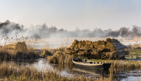 Cane cultivation with boat and ditch near Giethoorn and Kalenberg in wintertime in National Park Weerribben-Wieden, Netherlands.