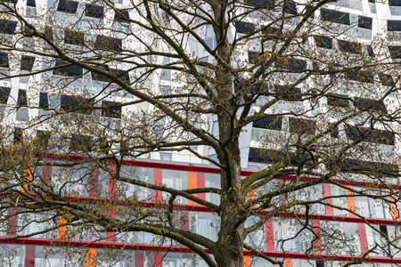 achitectural: Rotterdam, The Netherlands - March 10, 2017: Calypso Achitectural Building with a tree in front in Rotterdam city, the Netherlands. Editorial
