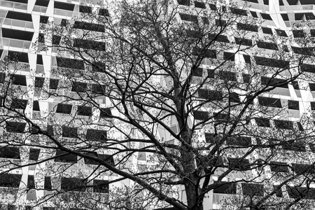 achitectural: Rotterdam, The Netherlands - March 10, 2017: Calypso Achitectural Building with a tree in front in Rotterdam city, the Netherlands (Black and White). Editorial