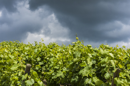 Storm Clouds above vineyard in the Champagne districht near Epernay, France Stock Photo