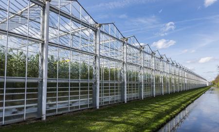 偉大なトマトの養樹園と夏の空が付いている Harmelen の温室。
