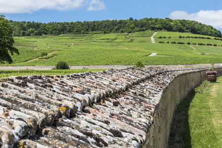 Vineyards at Oger wit great wall around vineyard, near Epernay in the Champagne districht, France. Stock Photo
