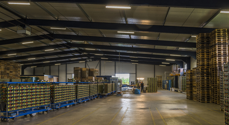 Harmelen, Netherlands - May 23, 2017: Tomatoes stockroom with pallets.