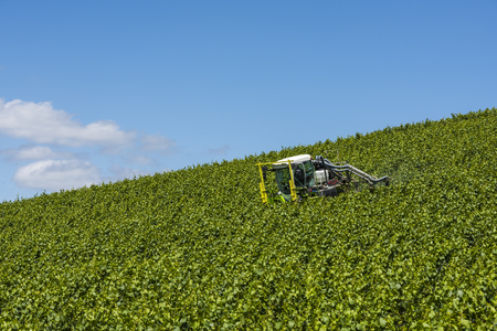 fungicide: Epernay, France - June 12, 2017: Tractor spraying vines in a vineyard near the Champagne village Epernay Champagne district, France.