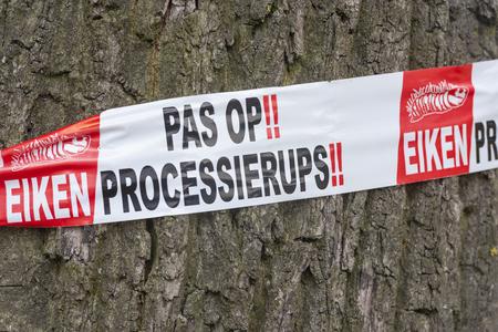 Bunnik, Nederland - 19 juni 2018: opwarming voor de eikenprocessierups op een eikenboom.