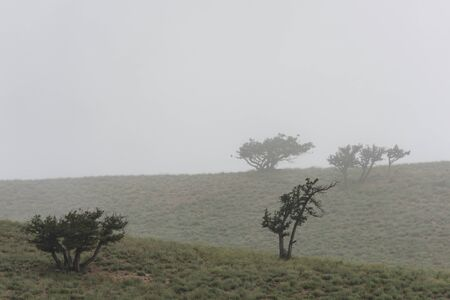 Mountains with fog and trees (firs) of the Golestan National Park in Iran.