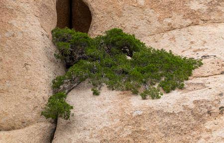 Rock formations in Bektau Ata with evergreen plant in Kazakhstan.