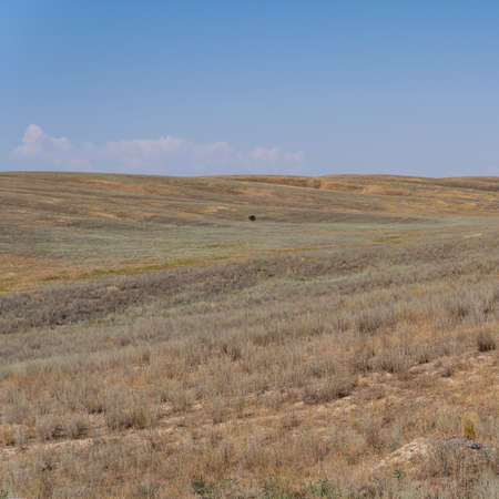 Lonely tree on the steppe of Kazakhstan on a summers day.