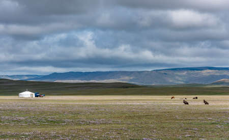 Tsetserleg, Mongoliam - August 11, 2019: Mongolian Yurt in the steppe with dark clouds and sky and two vultures in the foreground on the grass. 에디토리얼
