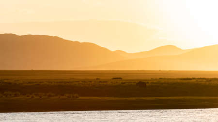Yak at the shore of a river in Mongolia during sunset wit bright orange colors and mountains.