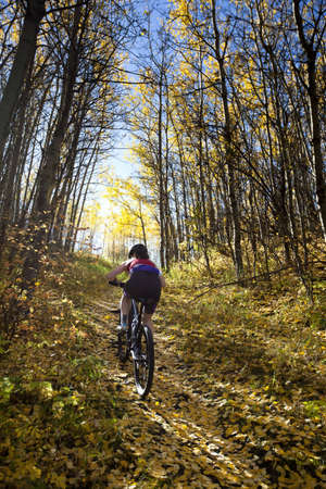 mountain bicycles: Woman mountain biking up trail in autumn