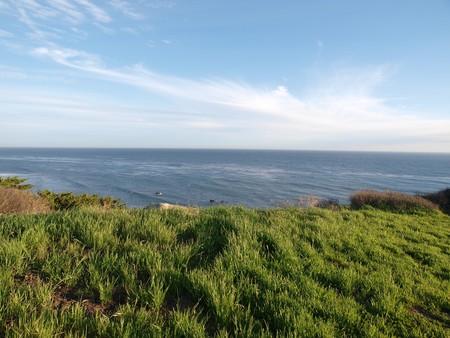 bluff: Green grass on a Pacific Ocean Bluff