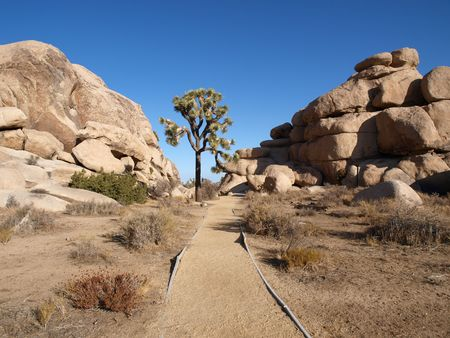 Lone Joshua tree with path to boulders. Stock Photo - 5684272