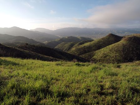 Lush spring grass in the Simi Hills northwest of Los Angeles.   photo