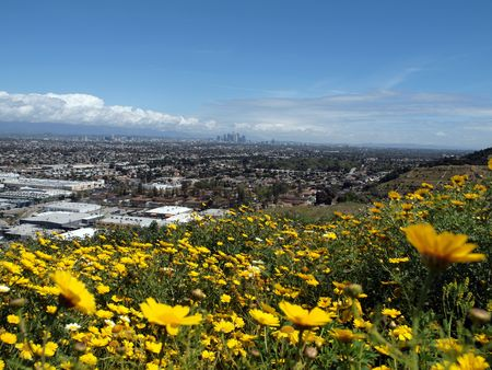 Spring flowers on top of the Baldwin Hills in the City of Los Angeles. Stock Photo - 6801714